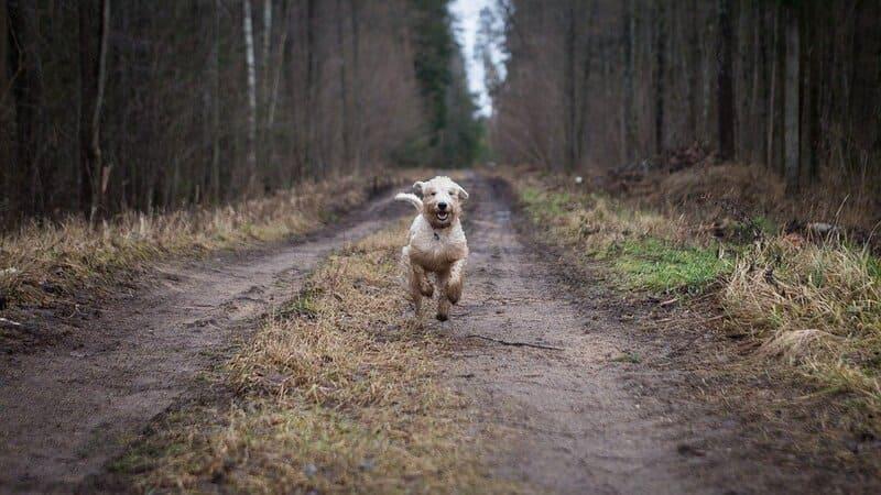 Promener Chien Sans Laisse