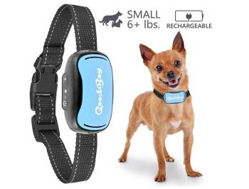 Collier Dressage Chihuahua